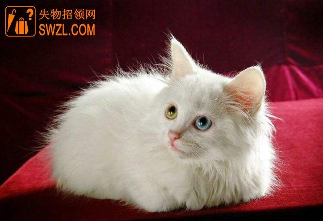 失物招领:猫咪