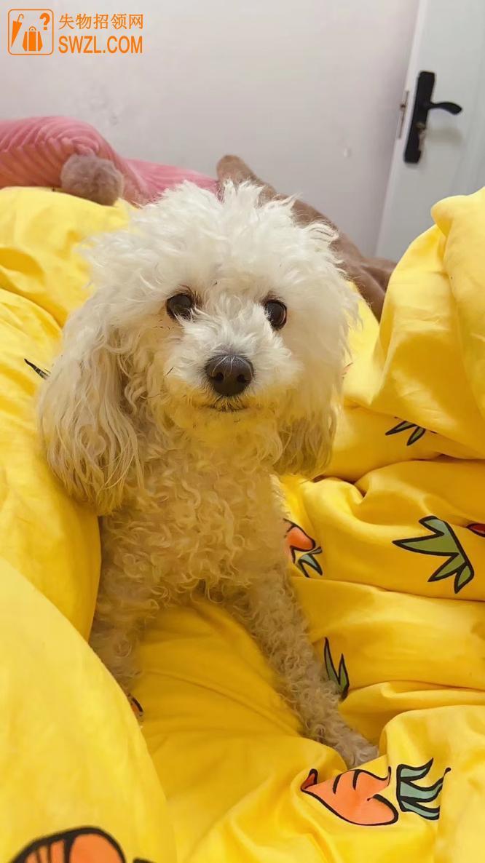 寻物启事: 寻爱犬卢比