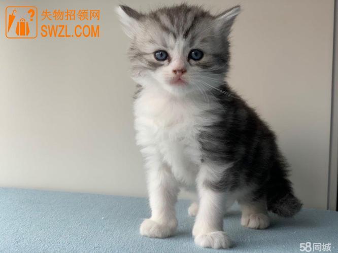 失物招领:猫