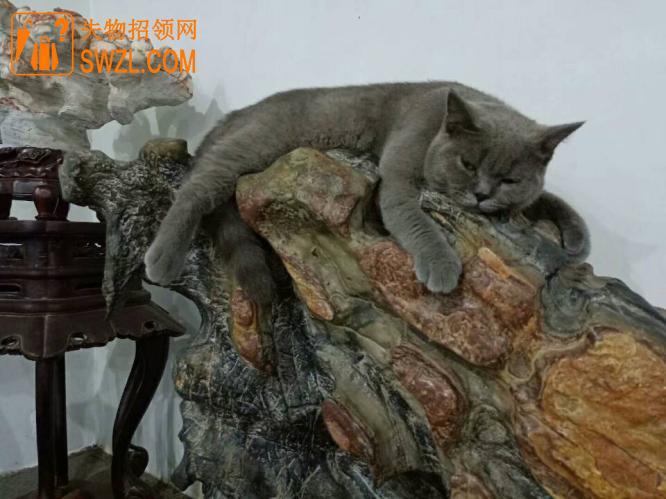 寻物启事: 寻猫启示