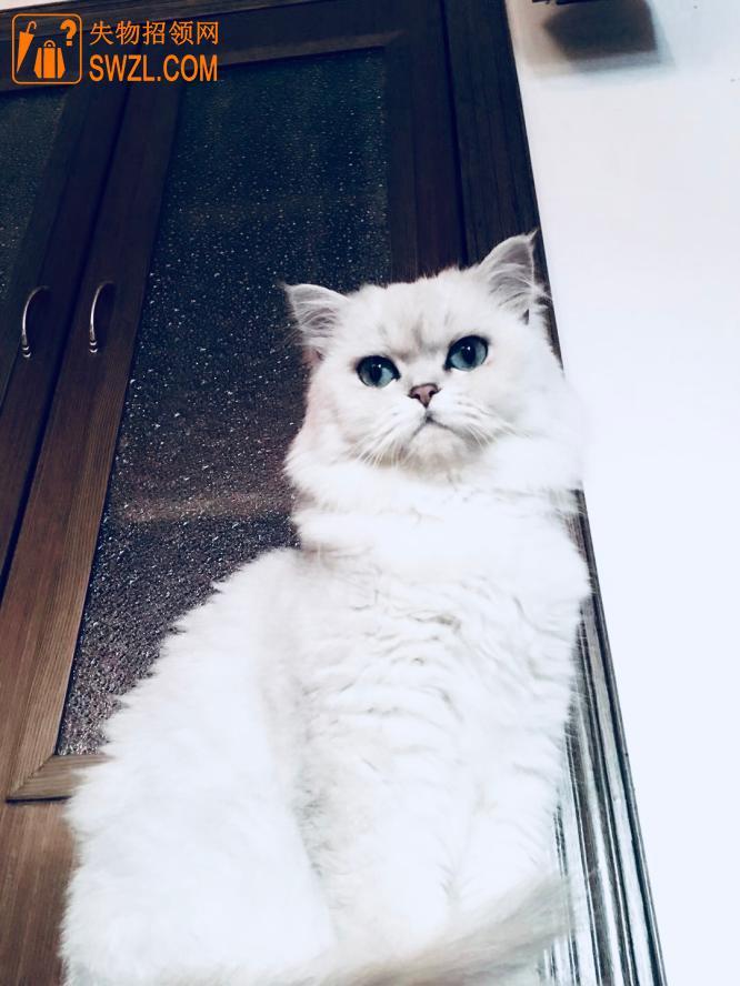 寻物启事: 寻猫启事