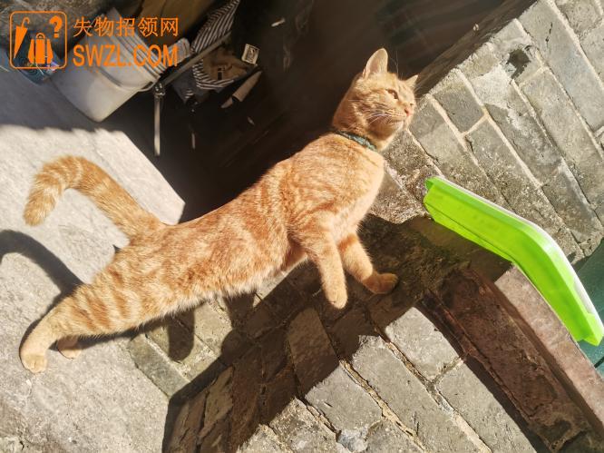 失物招领:寻找宠物猫