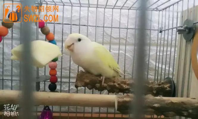 寻物启事: 寻找两只黄色小鸟