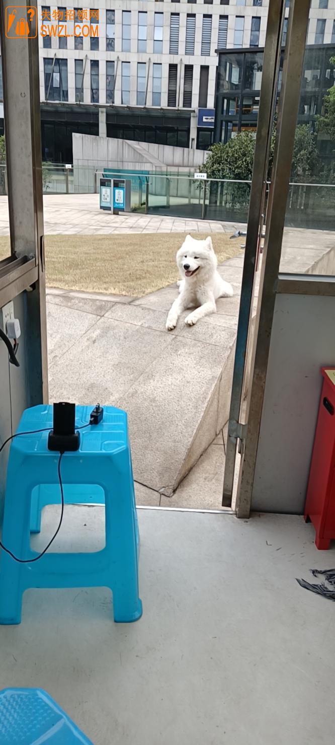 失物招领:拾获白色宠物犬