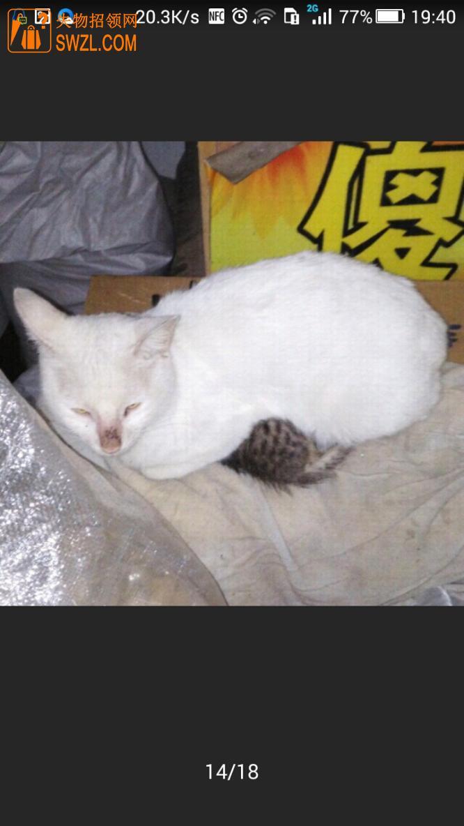 寻物启事: 重金寻找爱猫